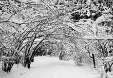 Winter scenery forest covered up with snow Royalty Free Stock Images