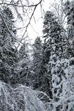Winter scenery forest covered up with snow Royalty Free Stock Image