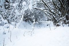 Winter scenery forest covered up with snow Royalty Free Stock Photo