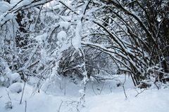 Winter scenery forest covered up with snow Stock Images