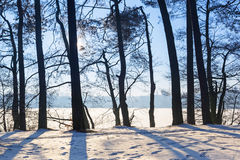 Winter scenery of forest at the lake Stock Images