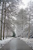 Winter scenery in the forest in the Netherlands. Europe Royalty Free Stock Photography