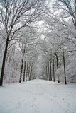 Winter scenery in the forest in Netherlands. Winter scenery in the forest in the Netherlands Royalty Free Stock Image