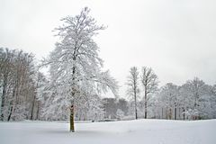 Winter scenery in the forest in Netherlands. Winter scenery in the forest in the Netherlands Royalty Free Stock Photos