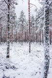 Winter scenery from forest Royalty Free Stock Photo