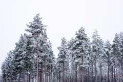 Winter scenery from forest Stock Photo