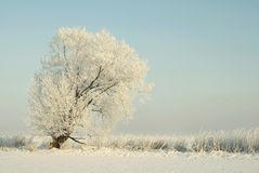 Winter scenery, frost covered the tree Royalty Free Stock Photo