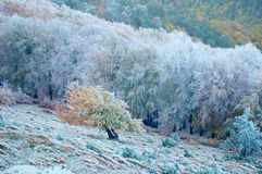 Winter scenery, frost covered the tree Royalty Free Stock Photography