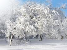 Winter scenery, frosty trees stock image