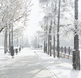 Winter scenery, frosty trees in a city park Royalty Free Stock Image