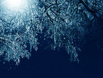 Winter scenery, frosty trees in moonlight stock photography
