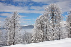 Winter scenery with frosty trees Stock Image