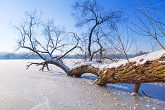 Winter scenery of frozen lake Stock Images