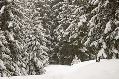 Winter scenery, Haute savoie, France Stock Photo