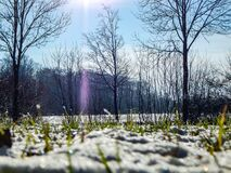 Free Winter Scenery In Schleswig-Holstein Stock Photography - 214354572