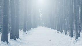 Winter scenery loop stock video