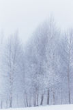 Winter scenery in the mountains Stock Images