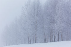 Winter scenery in the mountains Royalty Free Stock Photo