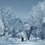 Winter scenery in park Stock Image