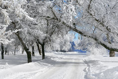 Winter scenery Stock Image