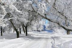 Winter scenery stock image