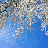 Winter scenery. Winter  park, scenery with trees in sunny cold day Royalty Free Stock Photos