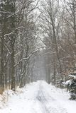Winter scenery in Poland. Winter and snow in Poland Stock Photos