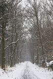 Winter scenery in Poland. Winter scenery in a park Stock Photos