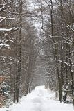 Winter scenery in Poland Royalty Free Stock Image