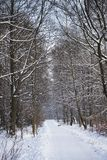 Winter scenery in Poland. Winter park scenery in Poland Stock Images