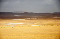 Winter Scenery in Qinghai-Tibet Plateau Royalty Free Stock Photos