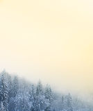 Winter scenery with snow covered coniferous forest Stock Photo
