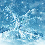 Winter scenery, snowstorm Royalty Free Stock Images