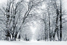 Winter scenery, snowstorm in park royalty free stock photo