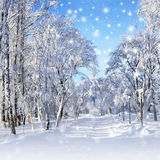 Winter scenery, snowstorm royalty free stock photography