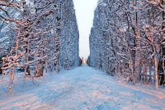 Winter scenery of snowy park in Gdansk. Poland Stock Photography