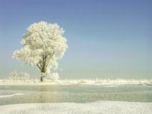 Winter scenery of snowy tree on the field Royalty Free Stock Image