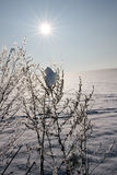 Winter scenery with sun Stock Photo