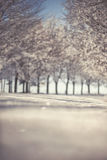 Winter scenery with tree alley, frozen winter photography Stock Photos