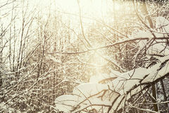 Winter scenery tree branches Alps, cross processing Royalty Free Stock Images
