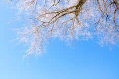 Winter scenery, trees covered by snow Royalty Free Stock Photo