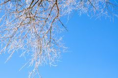 Winter scenery, trees covered by snow Royalty Free Stock Photos