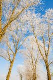 Winter scenery, trees covered by snow Stock Photo