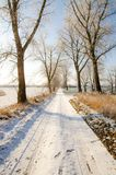 Winter scenery, trees covered by snow Royalty Free Stock Photography