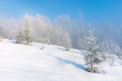 Winter scenery with trees in hoarfrost. On hillside. hazy weather on a bright sunny morning with clear blue sky stock image