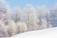 Winter scenery with trees in hoarfrost. On hillside. hazy weather on a bright sunny morning with clear blue sky stock photo