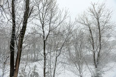 Winter scenery with trees Stock Photo