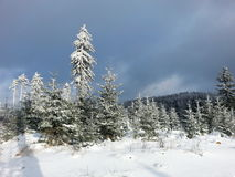 Winter scenery. Wintery and snowy view at forest Royalty Free Stock Images