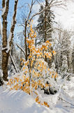Winter scenes after snow storm Stock Photography