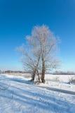 Winter Scenic Royalty Free Stock Photos
